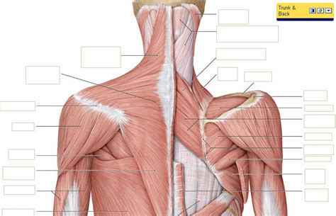 neck pain max superspecialty ortho clinic