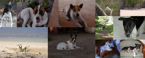 animals rescued angel island komodo