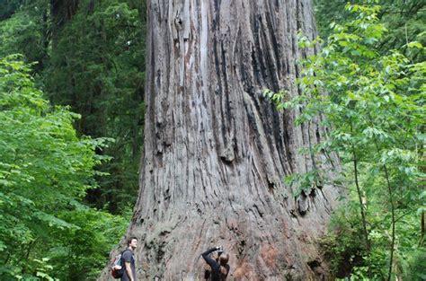 Ten Must See Redwood Trees