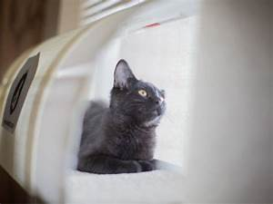17 best images about windowkitty on pinterest cat for Cat proof blinds