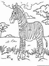 Zebra Coloring Pages Printable Sheets Animal Zebras Print Activity Books Sheet African Colouring Printables Animals Kid Boys Gorilla Zoo Bokito sketch template