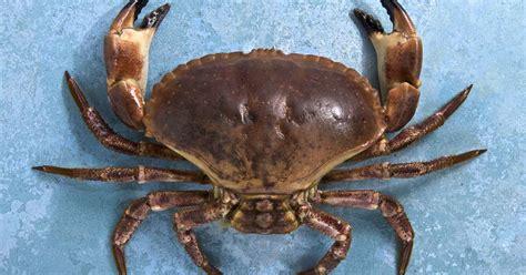cuisiner comme un chef recettes de crabe idées de recettes à base de crabe