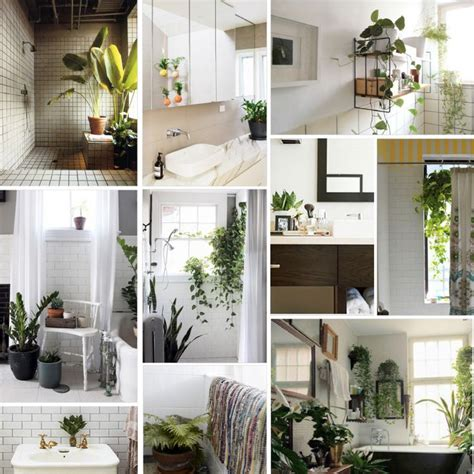 plants in the home bathroom bathroom pinterest