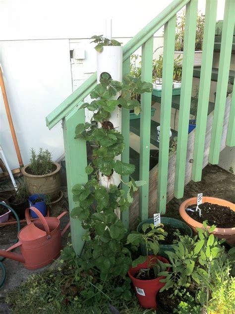 diy vertical planter how to make vertical strawberry tube planter diy crafts handimania