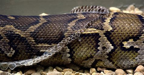 5 reasons why getting rid of snakes is a bad idea