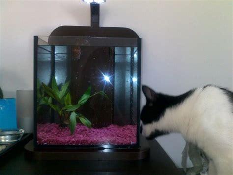 poisson pas cher pour aquarium aquarium pour poisson combattant pas cher 224 voir