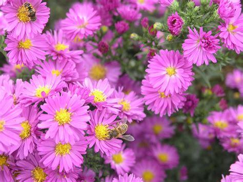 alle verschillende bloemen alle soorten bloemen potplanten buiten schaduw