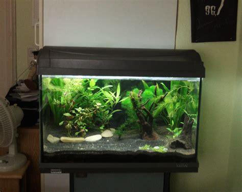 fische für 60 liter aquarium 60 liter aquarium fische 1000 aquarium ideas