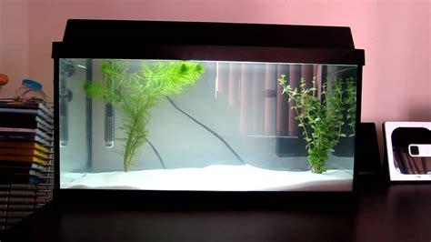fische für 60 liter aquarium juwel korall 60 aquarium 54l 14 gallons