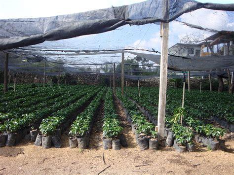 Antigua guatemala safety travel tips and information. Antigua, Guatemala | Coffee Plantation in Antigua | Ron Kikuchi | Flickr