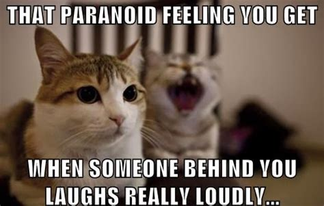 Laughing Cat Meme 30 Powerfully True And Hysterical Cat Memes Purrtacular