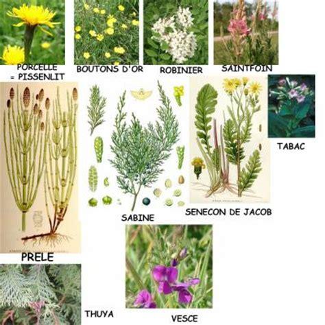 les plantes toxiques 3 eme partie hom 233 opathie et phytoth 233 rapie pour animaux