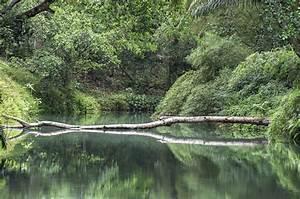 Baum Am Wasser : das wasser im bach ist gr n und hellgr ner baum am kapao ~ A.2002-acura-tl-radio.info Haus und Dekorationen