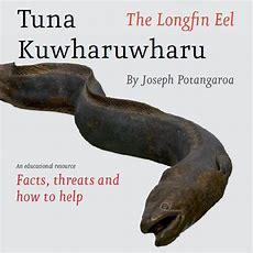 Tuna Kuwharuwharu The Longfin Eel By Joseph Potangaroa  Manaaki Tuna  Manaaki Tuna