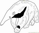 Anteater Coloring Giant Pages Young Printable Template Coloringpages101 Print sketch template