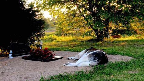 Aizkustinošs pašmāju stāsts: Suns jau divus gadus apmeklē ...