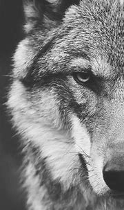 Animal / Wolf (1080x1920) Mobile Wallpaper   Iphone ...