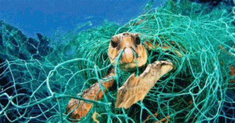 Endangered Marine Life Images