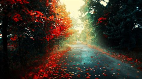 simple Background Simple Road Trees Landscape Nature