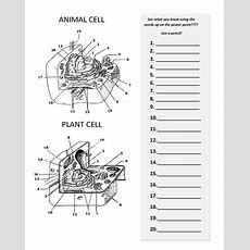 Plant And Animal Cell Diagram Worksheet  Bio  Pinterest Worksheets