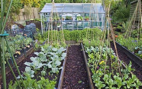 How To Keep Your Vegetable Patch Going Strong Through The