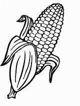 Corn Coloring Indian Printable Pages Cob Preschool sketch template
