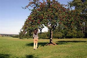Bäume Verschneiden Obstbäume : obstb ume nabu baden w rttemberg ~ Lizthompson.info Haus und Dekorationen