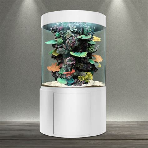aquarium eau de mer pas cher poisson naturel