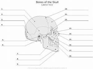 Image Result For Skull Diagram Blank