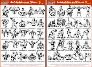 Bodybuilding Program Pdf
