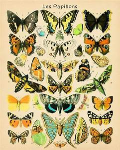 Butterfly Poster - Insect Art