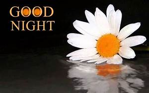 Good Night Flowers Images - Flowers GN Images Download Now