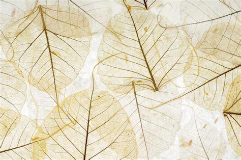transparent leaves stock image image  skeleton natural