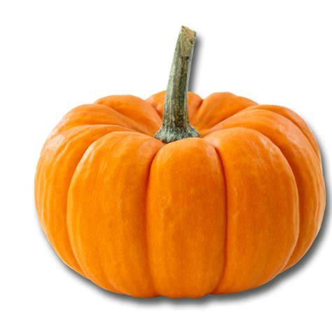 cuisiner du potiron fête du potiron le 11 novembre la terrasse du t3