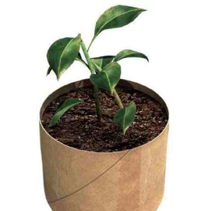 les 25 meilleures id 233 es concernant papier de semences sur bombes de semences