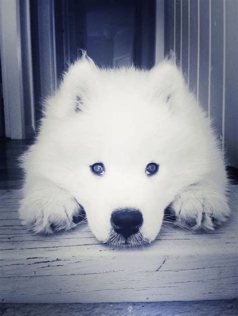 2327 Best Images About Love Snow Dogs ︎ On Pinterest