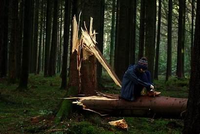 Sad Forest Broken Nature Trees Woods Winter