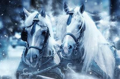 Horses Winter Snow Horse Paper Scrapbooking Head