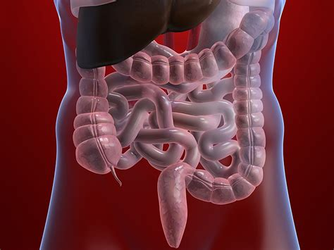 alimentazione intestino irritabile intestino irritabile quando mangiare diventa un problema