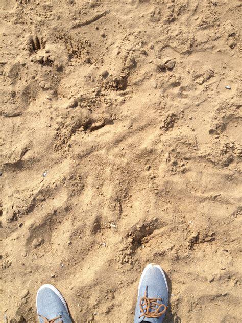Sand Flooring   Nature Idea