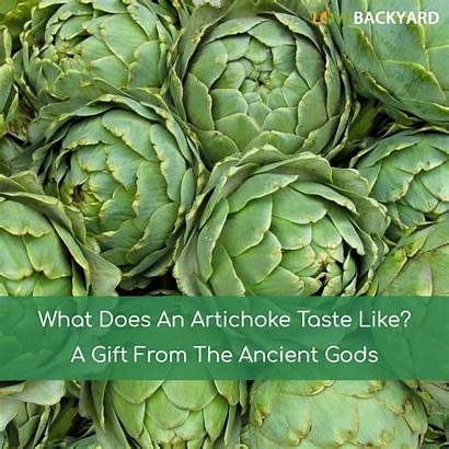 Artichoke Does Taste Fruit Gift Vegetables Gods