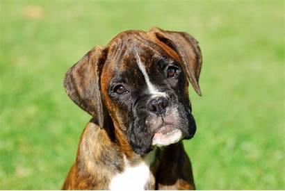 Dog Breeds Favourite Why Pets4homes Number