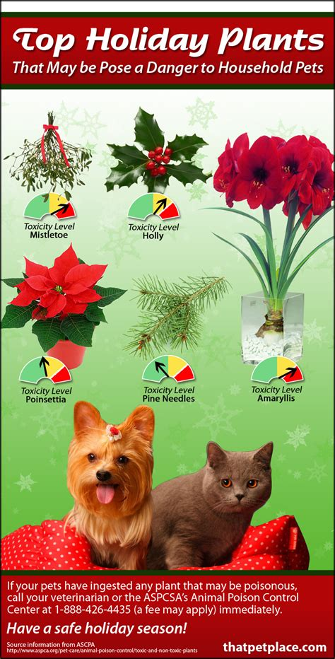 holiday dangers poisonous plants popular during the