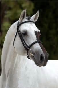 Beautiful Horse Face Markings