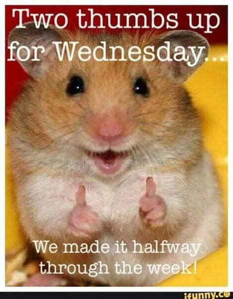25 Happy Wednesday Memes That Will Make It a Little Easier ...