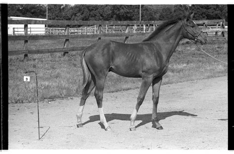 Secretariat's Birthplace Named Va Landmark