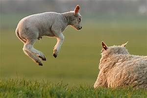 16. Levitating Lambs – Roeselien Raimond Photography