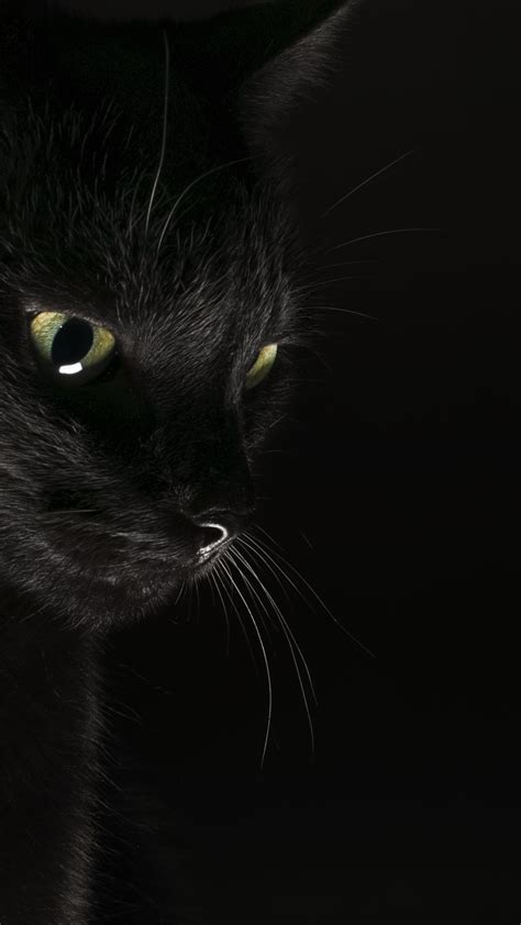 Phone Wallpaper Black Cat by Black Cat Wallpapers Top Free Black Cat Backgrounds