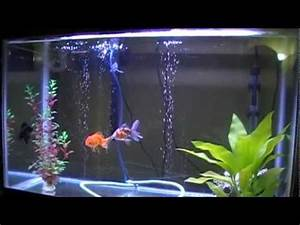 30 Gallon Goldfish Aquarium - Black Moor, Oranda, Ryukin ...