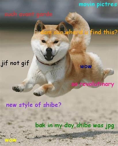 Dog Doge Wow Shiba Inu Shibe Such